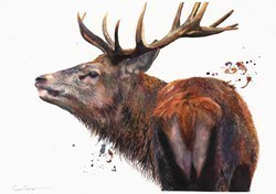 Red Stag by Sarah Stokes -  sized 30x22 inches. Available from Whitewall Galleries